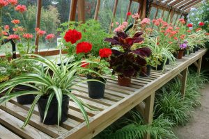 Staging Your Home for Summer